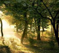创建森林城市倡议书参考范文