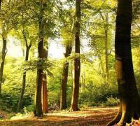 创建国家森林城市工作总结范文