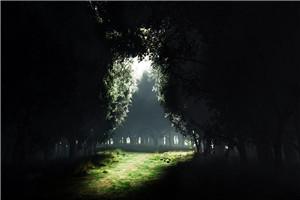 神话故事_油棕树和蜂鸟