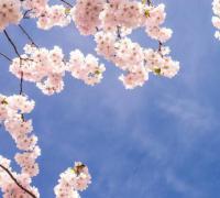 关于描写四月的优美句子语句,形容4月的句子集锦