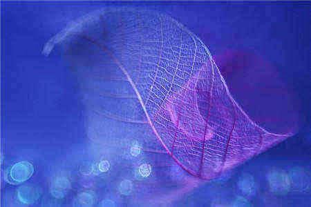 关于植物的句子_描写桂花香的唯美句子