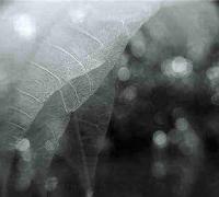 描写秋的诗句_描写秋色的唯美诗词