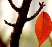 叶子离开树的悲伤心情语句