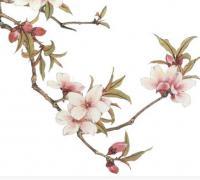 关于唯美句子大全_描写桃花的唯美古风句子