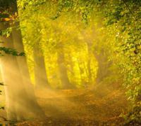 描写阳光的唯美句子_午后阳光唯美句子
