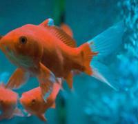 关于鱼和水的唯美句子,鱼和水相依的句子语句