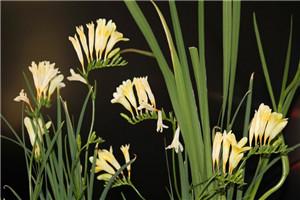 关于青春的诗歌: 《面朝大海,春暖花开》