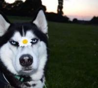 单身狗的朋友圈怎么发?调侃自己单身的话
