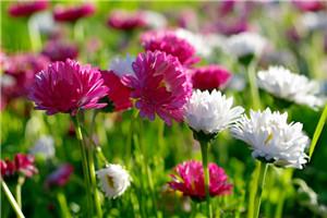 描写春天的诗句_春天的古诗大全