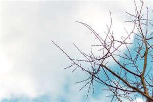 描写春夏秋冬的古诗词曲赏析
