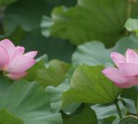 关于中国梦劳动美诗句诗歌