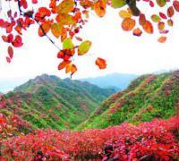观看专题片《永不凋零的巴山红叶》观后感