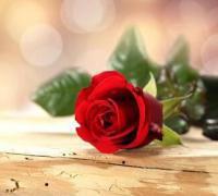 19朵玫瑰花的花语是什么?19朵玫瑰花的含义及寓意介绍