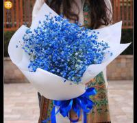 蓝色满天星花语和寓意
