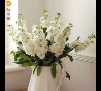 白色紫罗兰花语是什么