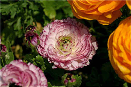 关于花的文章_校门口的栀子花