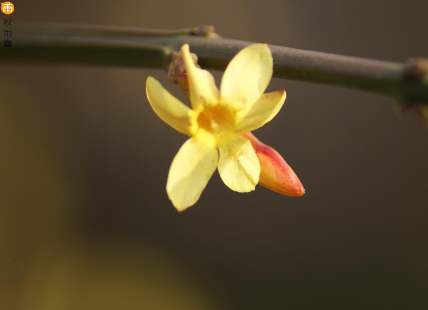 佛家关于善良的佛理禅语