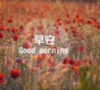 早安心语正能量 励志