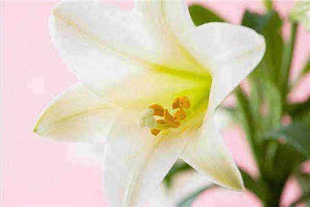 送花祝福语_给老婆送花卡片留言暖心