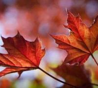 叶子的离开经典语录